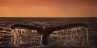 Bitcoin Price Dump whale alert