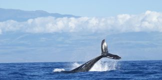Whale Ethereum and Bitcoin Crypto Transfers