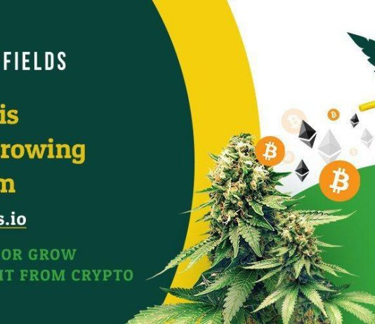 JuicyFields Review One Of The Hottest Cannabis Platforms in Europe