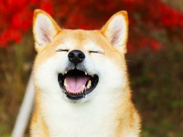 Shiba inu rejected from CoinbasePro